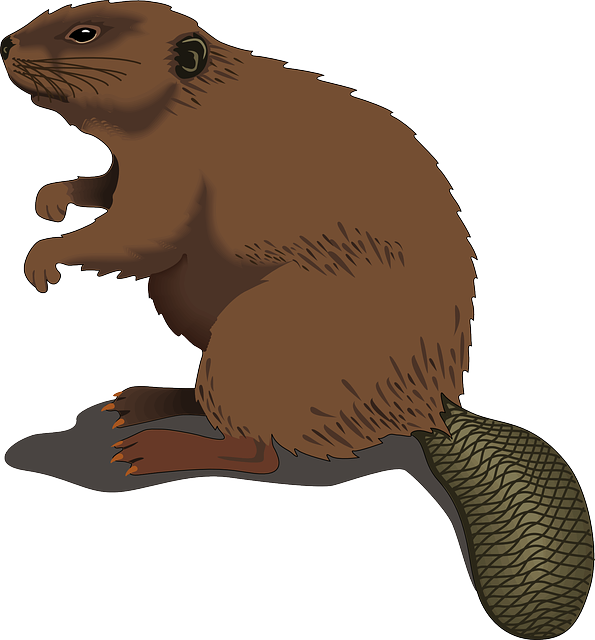 Beaver clipart #14, Download drawings
