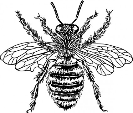 Bee Hive svg #6, Download drawings
