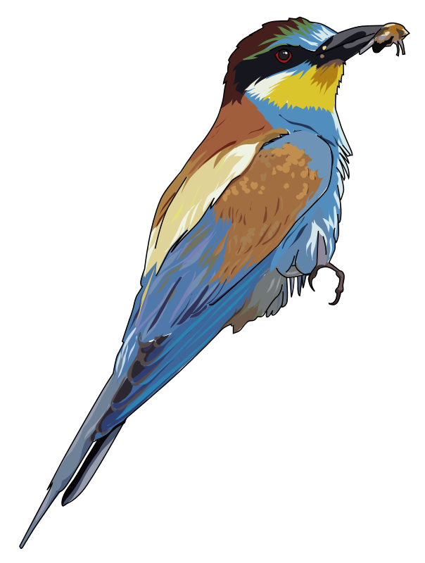 Bee-eater clipart #2, Download drawings