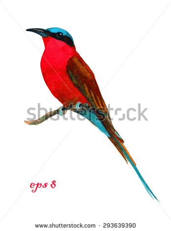 Bee-eater clipart #14, Download drawings