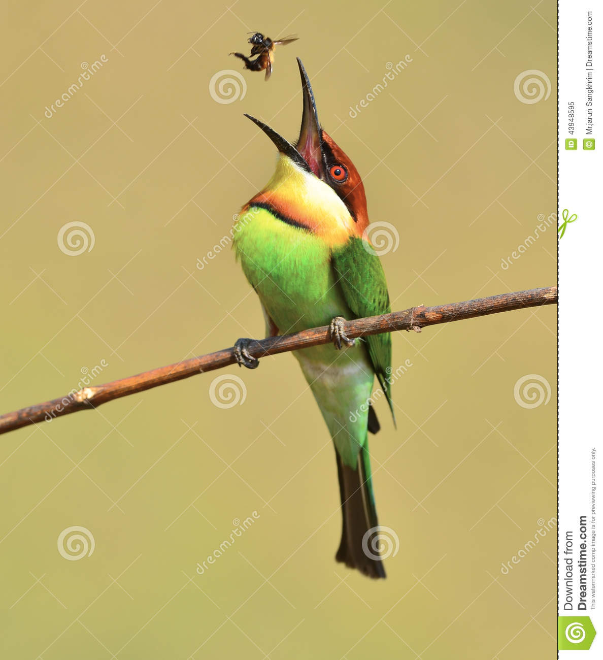 Bee-eater clipart #15, Download drawings