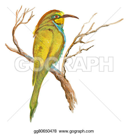 Bee-eater clipart #4, Download drawings