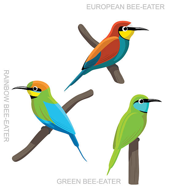 Bee-eater clipart #20, Download drawings