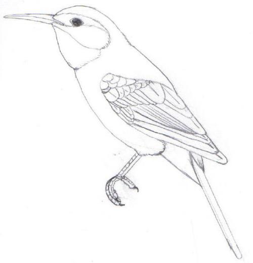 Green Bee-eater coloring #19, Download drawings