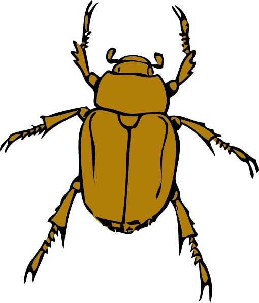 Beetles clipart #14, Download drawings