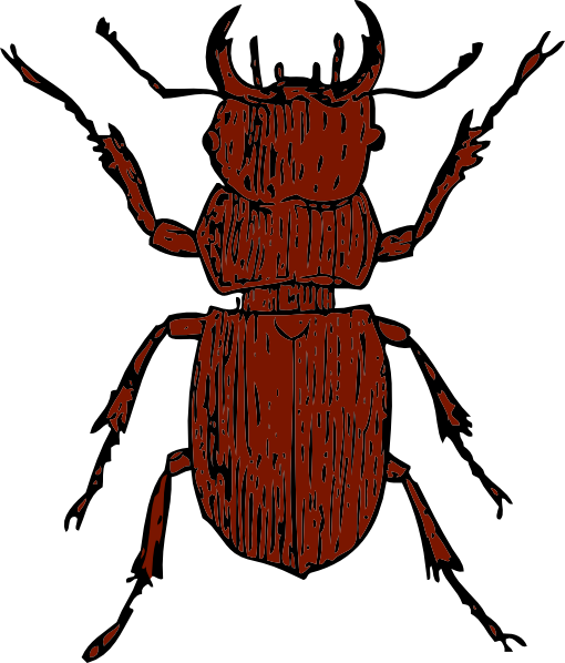 Beetles clipart #5, Download drawings