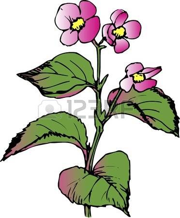 Begonia clipart #16, Download drawings
