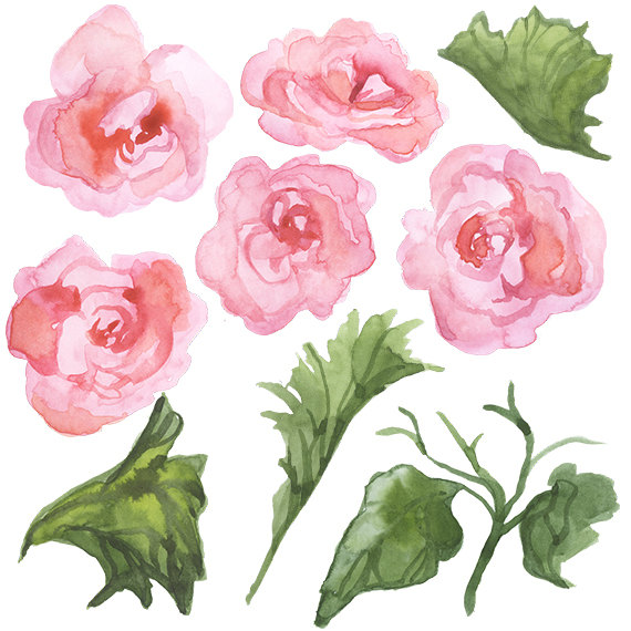 Begonia clipart #5, Download drawings