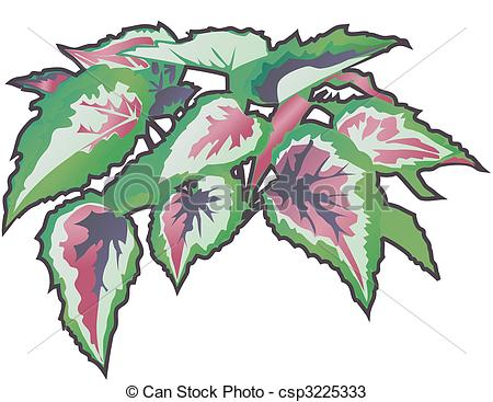 Begonia clipart #18, Download drawings