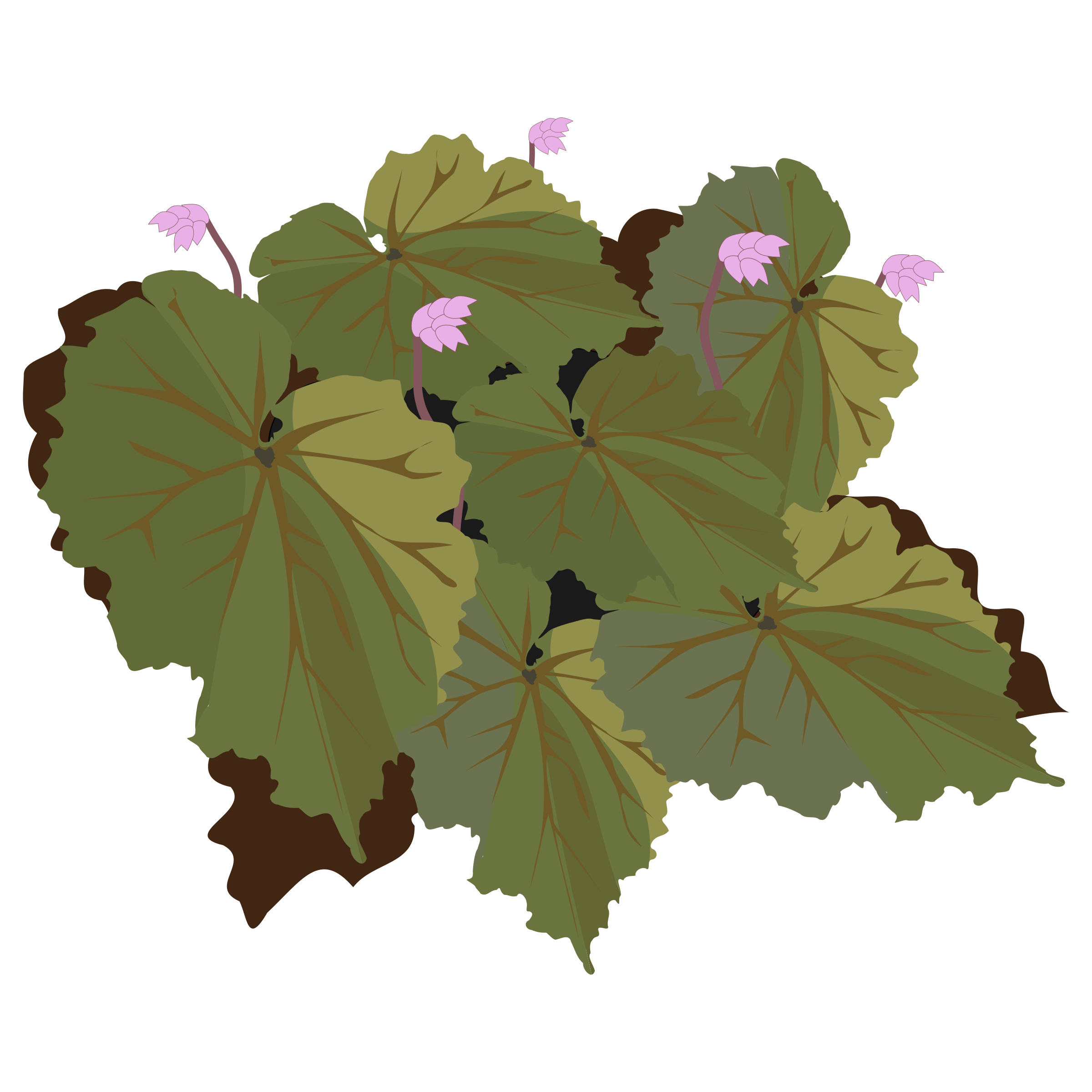 Begonia clipart #4, Download drawings