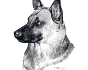Belgian Malinois clipart #7, Download drawings
