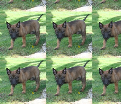 Belgian Malinois svg #14, Download drawings