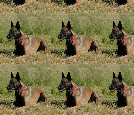 Belgian Malinois svg #13, Download drawings
