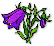 Bellflower clipart #20, Download drawings