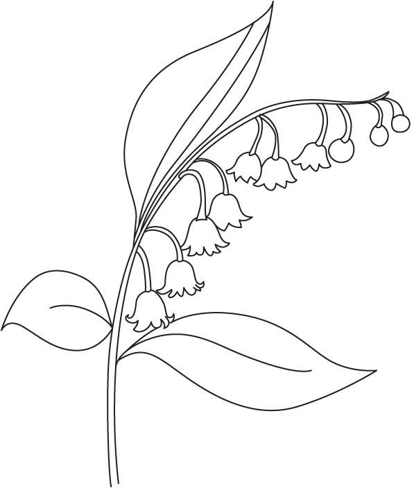 Bellflower coloring #5, Download drawings