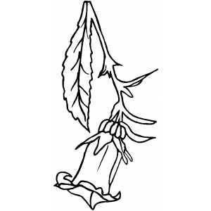 Bellflower coloring #12, Download drawings