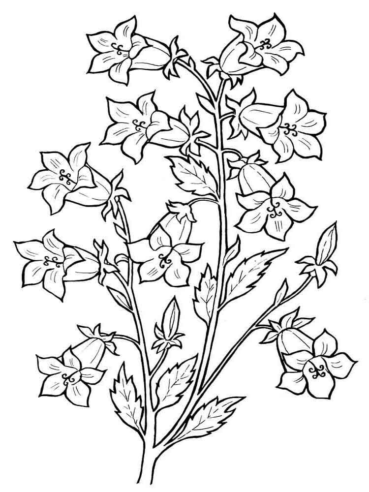 Bellflower coloring #4, Download drawings