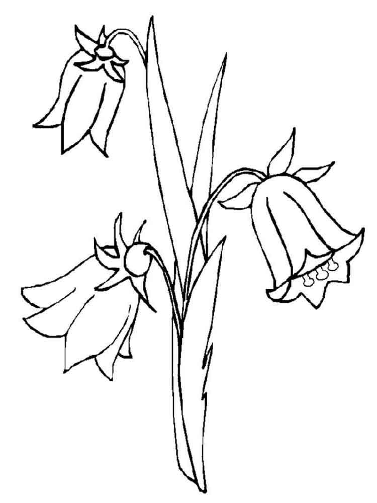 Bellflower coloring #16, Download drawings