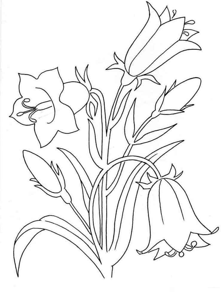 Bellflower coloring #14, Download drawings