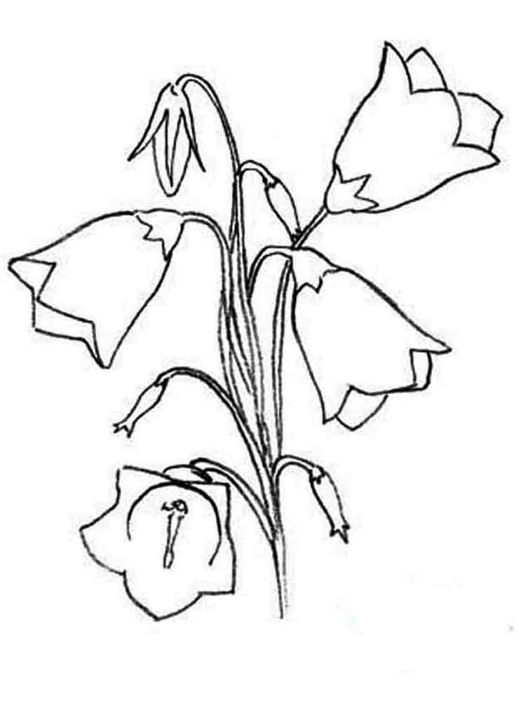 Bellflower coloring #3, Download drawings