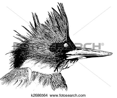 Belted Kingfisher clipart #8, Download drawings