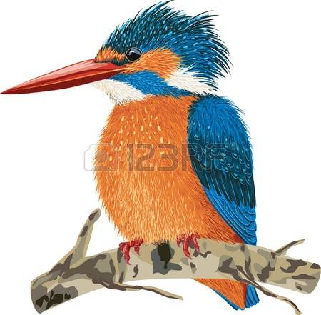 Belted Kingfisher clipart #4, Download drawings