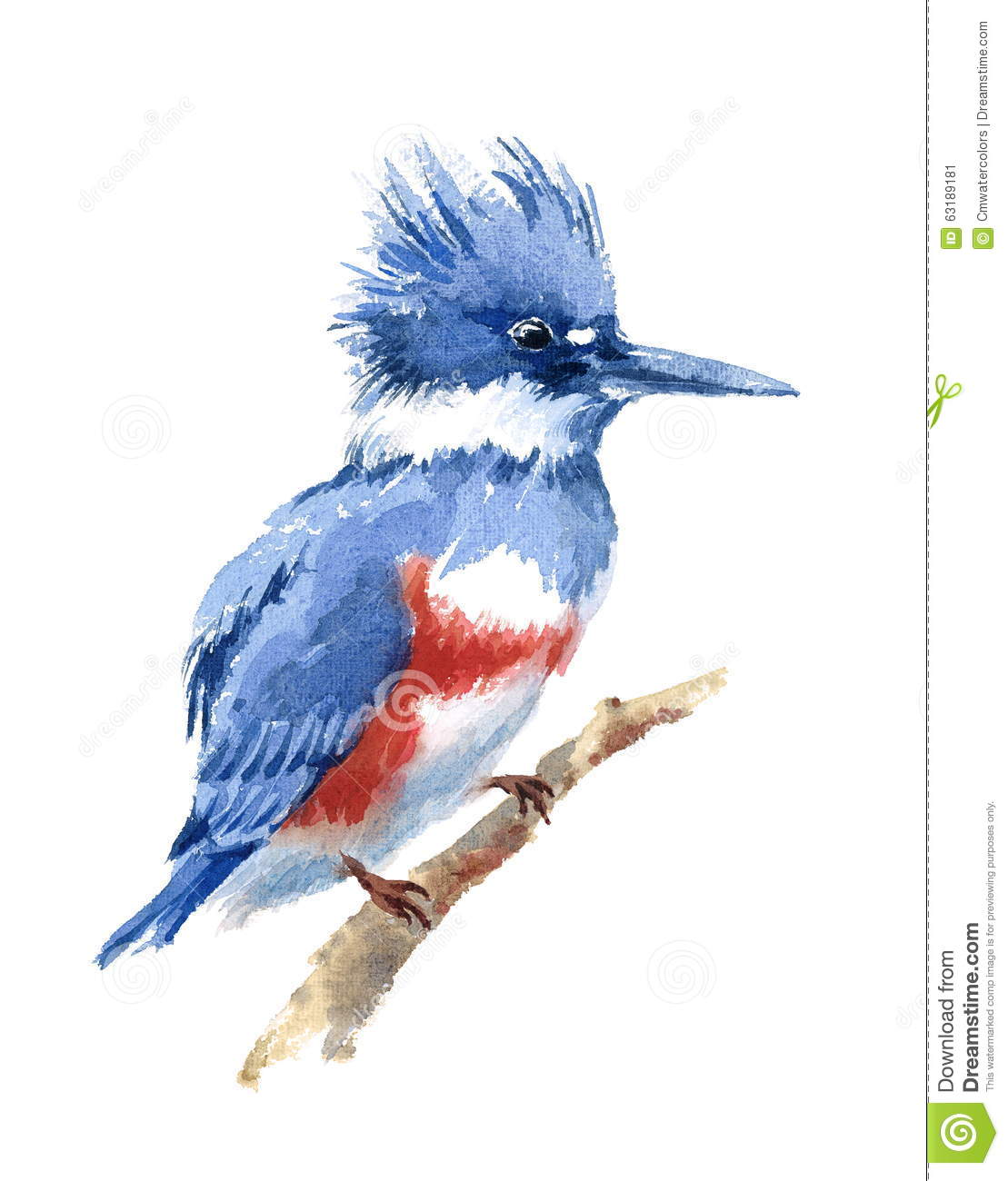 Belted Kingfisher clipart #19, Download drawings