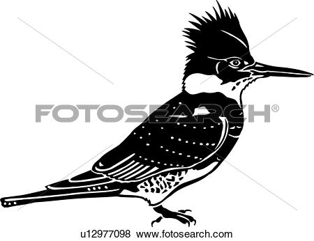 Belted Kingfisher clipart #16, Download drawings