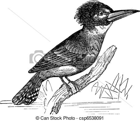 Belted Kingfisher clipart #11, Download drawings