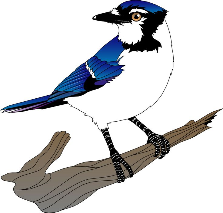 Belted Kingfisher svg #17, Download drawings