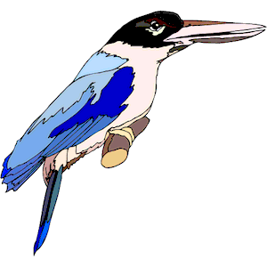Belted Kingfisher svg #18, Download drawings