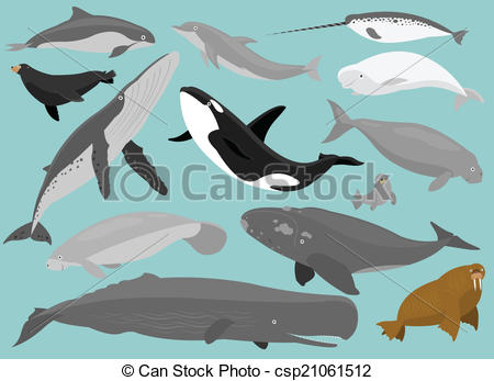 Beluga clipart #12, Download drawings
