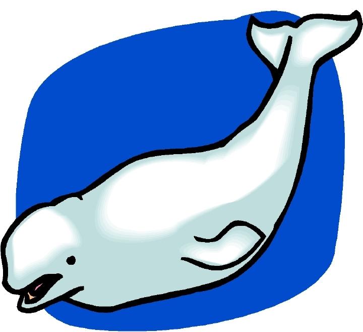 Beluga clipart #7, Download drawings