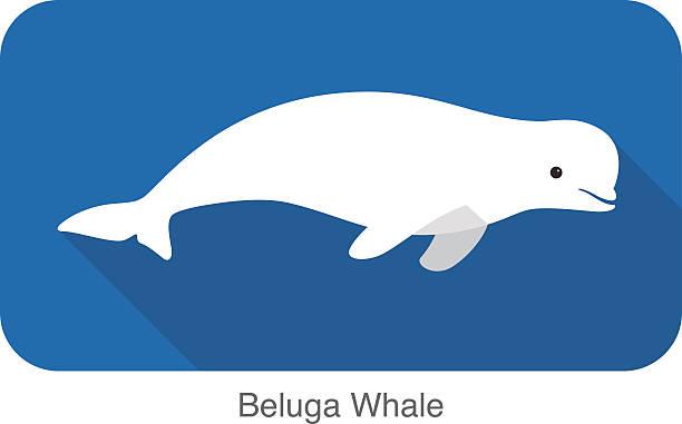 Beluga clipart #11, Download drawings