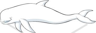 Beluga clipart #2, Download drawings