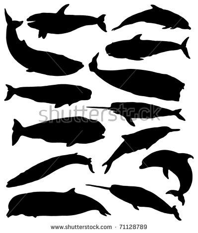 Beluga svg #4, Download drawings
