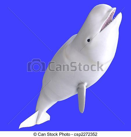 Beluga clipart #8, Download drawings