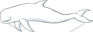 Beluga Whale clipart #17, Download drawings