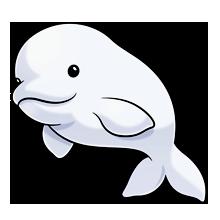 Beluga Whale clipart #6, Download drawings