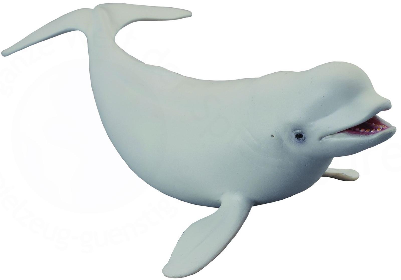 Beluga Whale clipart #8, Download drawings