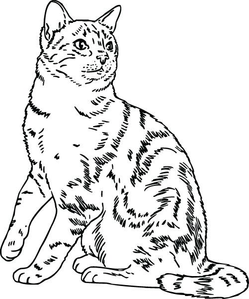 Bengal Cat clipart #16, Download drawings