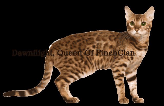 Bengal Cat clipart #20, Download drawings