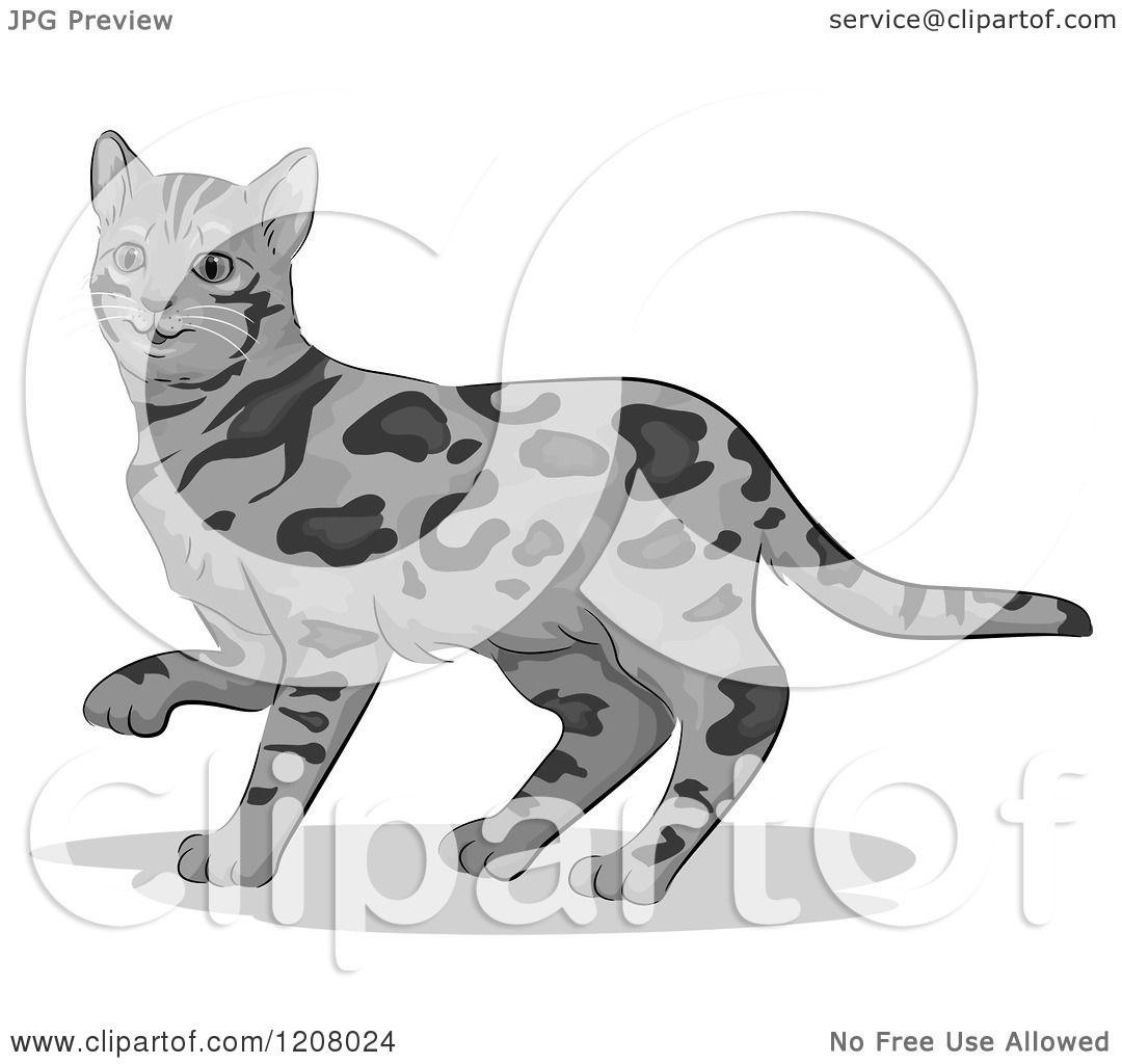 Bengal Cat clipart #15, Download drawings