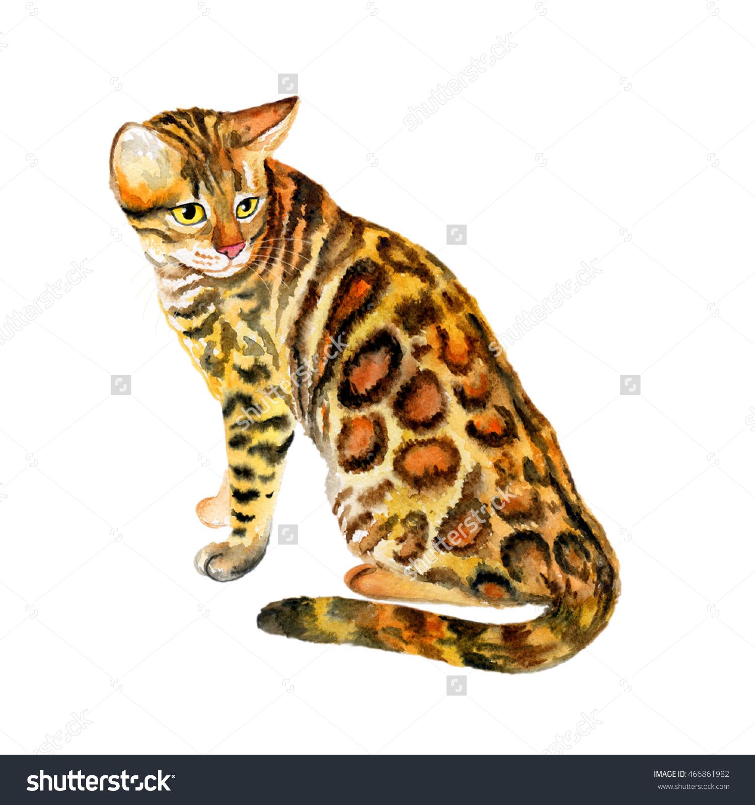 Bengal Cat clipart #2, Download drawings