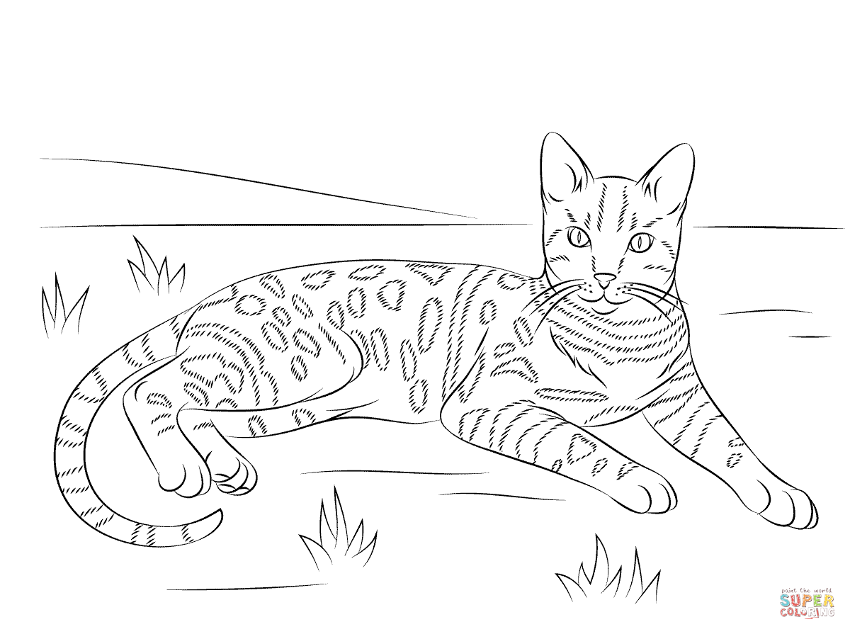 Tabby Cat coloring #2, Download drawings