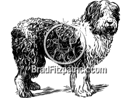Bergamasco Shepherd clipart #1, Download drawings
