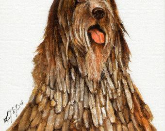 Bergamasco Shepherd clipart #17, Download drawings
