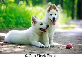 Berger Blanc Suisse clipart #6, Download drawings