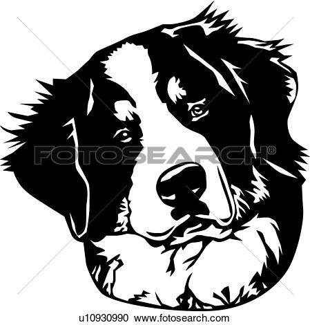 Bernese Mountain Dog clipart #12, Download drawings
