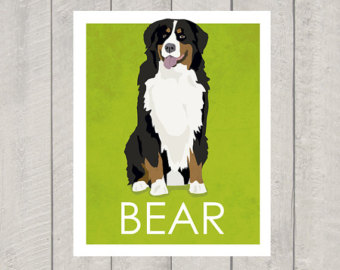 Bernese Mountain Dog clipart #5, Download drawings